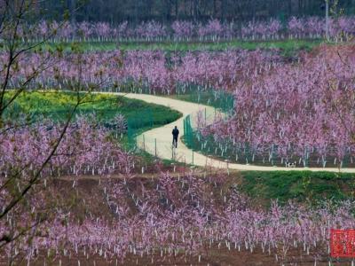 【 春】-美丽的乡村