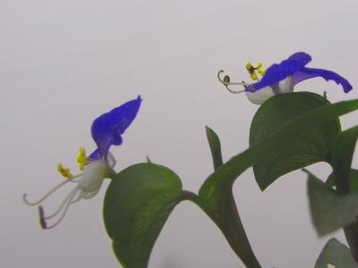 [春]满园春色