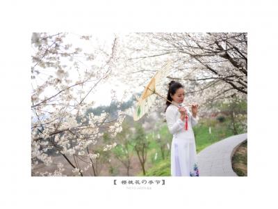 【春】《奥黛、樱桃花美》