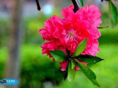 【春】-桃花红了