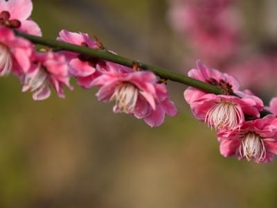 【春】_四方山北门、早春梅花还艳