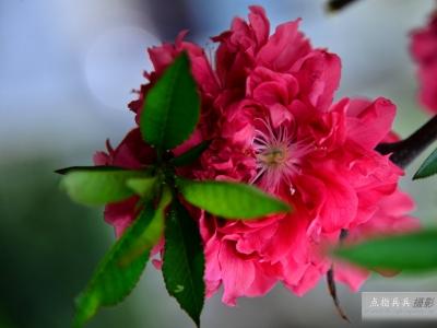 [春]满天红