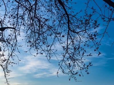 【春】忽如一夜春风来 千树万树梨花开