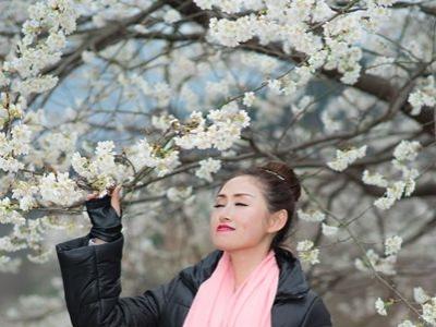 【 春 】樱花美女