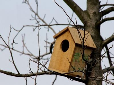 【有意思】-为鸟造家