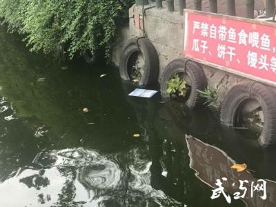 人民公園游客不文明行為引擔憂