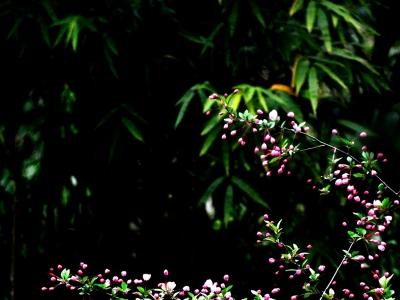 [春]含苞预放