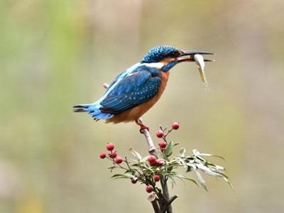 【有意思】小鸟吃鱼