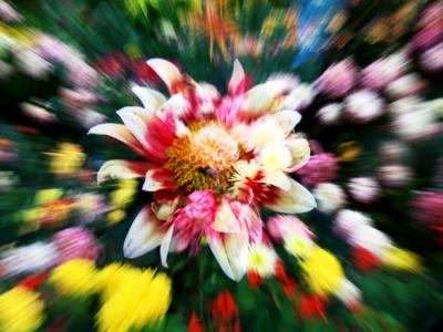 【有意思】+奇异花朵