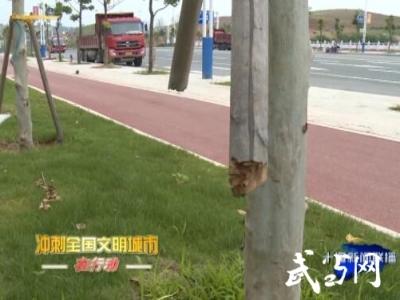 郧阳区汉江大道 四方山北门附近 部分行道树稳定桩被破坏