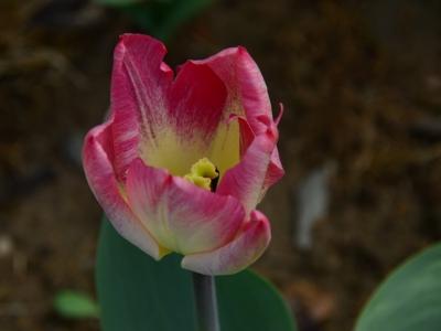 【春】留住春色