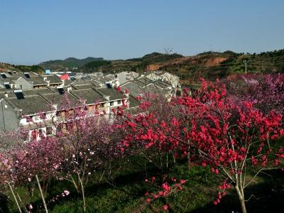 【春】桃花盛开的地方