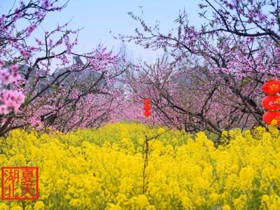 【春】三生三世,十里桃花开