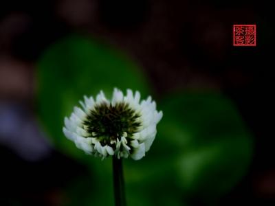 【春】-路边的小花