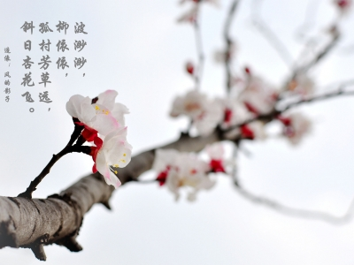 【春】水墨杏花
