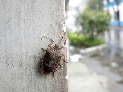 【春】这个虫子也来赏春