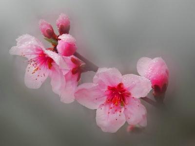 [春]鲜花怒放时