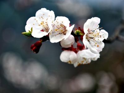 【春】小花更妖艳
