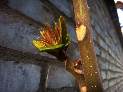 【春】-春之芽