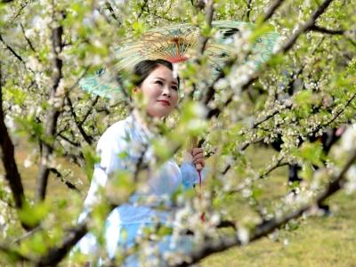 【春】《相伴春天》