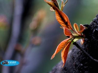【春】-公园小花