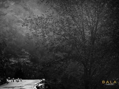 【赛武当】《赛武当景区小景》黑白一组
