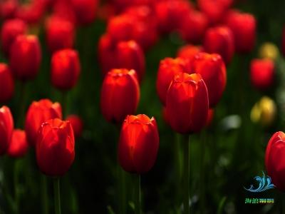 【春】浪漫黄龙,郁见惊喜。