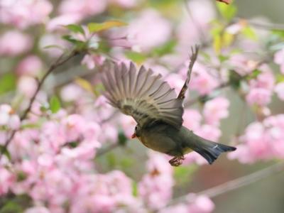 【春】莫负春光花盛时