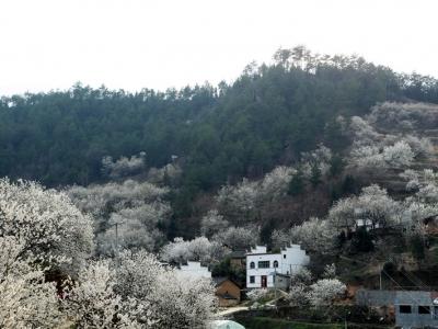 【春】花茂景美人芬芳
