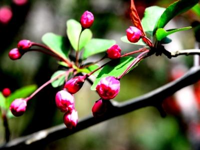 [春]给春天添美