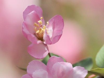 【春】采蜜忙