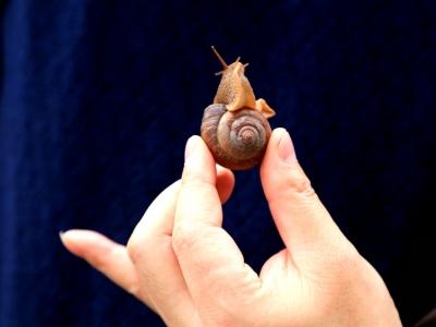 [有意思]—蜗牛探冬