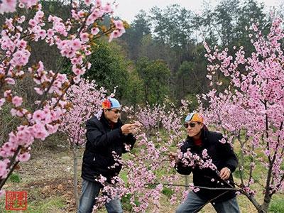 【春】兄弟赏花