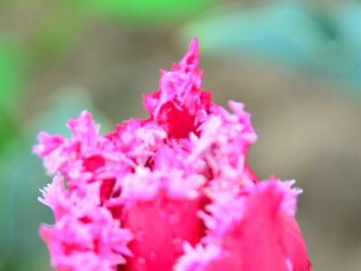 [春]生态园今年新品种