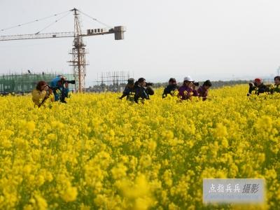 (春)菜花儿黄