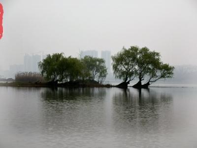 【春】春天的丹江湿地是这样的