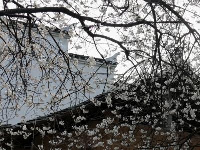 【春】梯子沟的春天