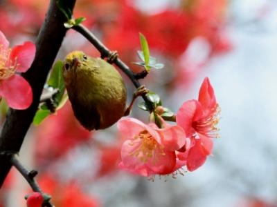 【春】花鸟图