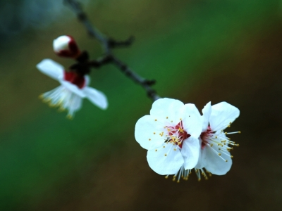 【春】三月桃花开