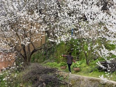 [春]大地之花