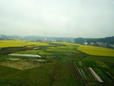 【春】雨中乡村美景