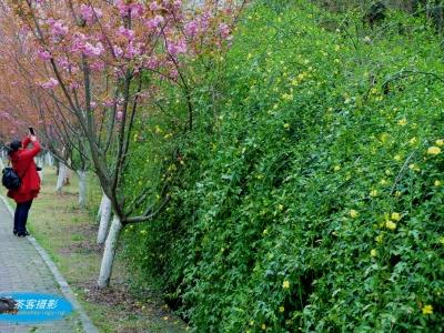 【春】-校园的春色