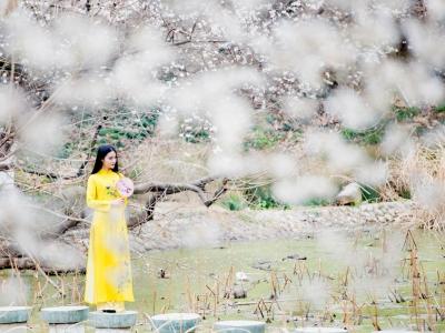 【春】《樱花.女人》