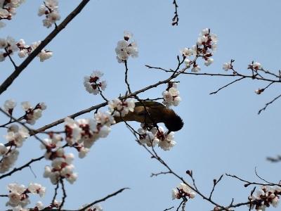 【春】鸟语花香