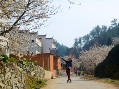 【春】梯子沟的樱花漂香十里