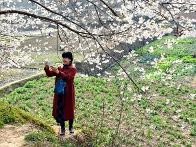 【春】樱桃花烂漫满山沟