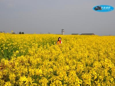【春】-油菜花开,赏春时