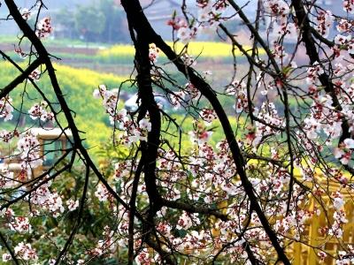 【春】-小景探春