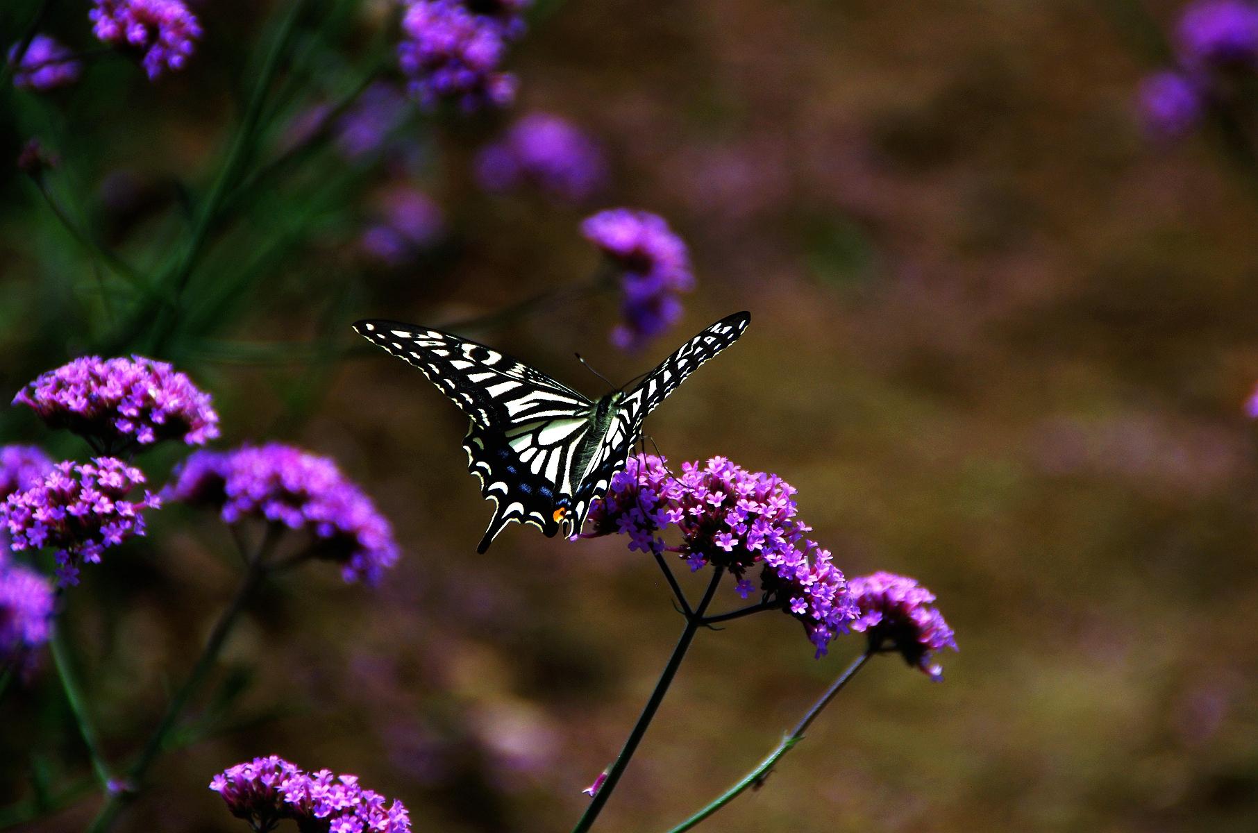 十堰的普罗旺斯方滩乡沉潭河薰衣草紫色花海的天堂