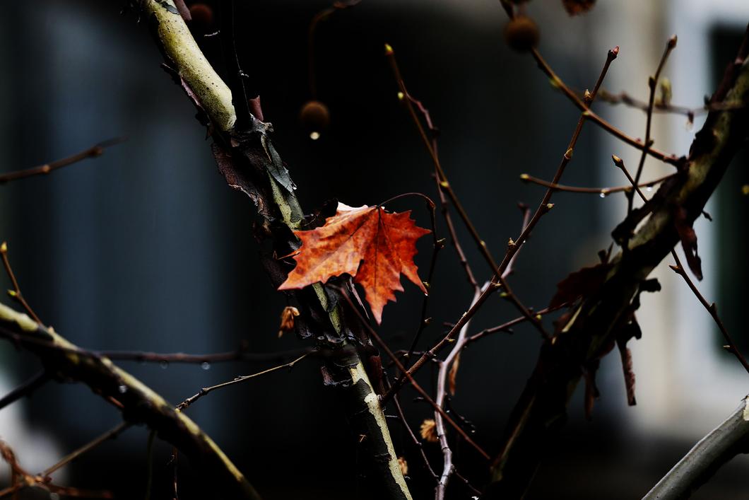 雨中的秋叶